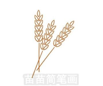 麦穗简笔画图片步骤三