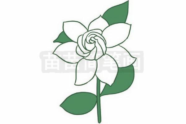 步骤五:填上颜色,注意茉莉花是白色的,叶子要填上绿色.