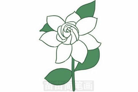 填上颜色,注意茉莉花是白色的,叶子要填上绿