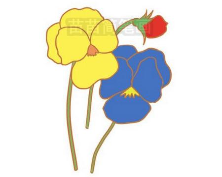 简笔画 风景简笔画 植物花卉简笔画 >> 正文内容   三色堇小知识