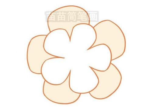 山茶花插枝经过植物生长激素处理后,通过插枝伤口、切口、叶液等进入,运转到插枝组织内起调节作用,促进愈伤组织形成和根的生