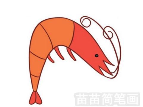 神仙虾体形似虾,但属无甲目(anostraca).