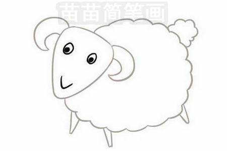简笔画 动物简笔画 家禽家畜简笔画 >> 正文内容   绵羊小知识:绵羊
