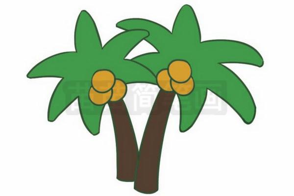 椰子树简笔画图片步骤五