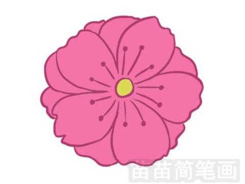 樱花简笔画图片大全 画法