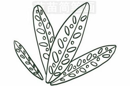 竹芋简笔画图片步骤四