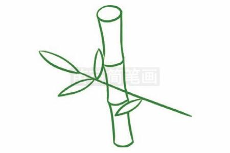 竹子简笔画图片步骤二