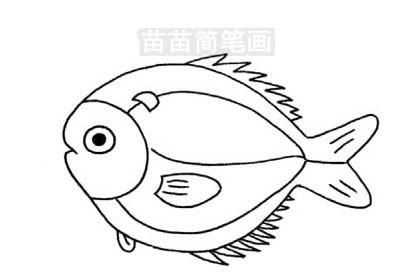 简笔画 动物简笔画 海洋动物简笔画 >> 正文内容   鲳鱼小知识:金鲳