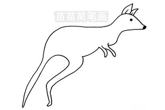 袋鼠简笔画图片大全 画法