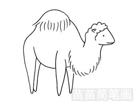 鼻行动物简笔画