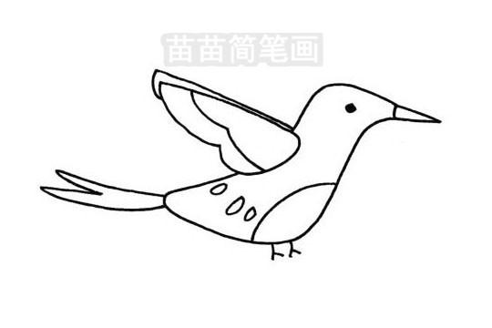 蜂鸟简笔画图片大全 教程
