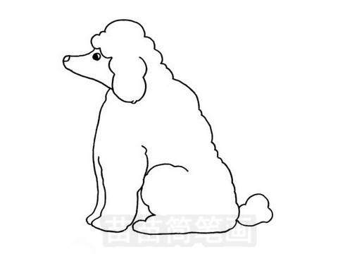 贵宾犬简笔画图片大全 教程