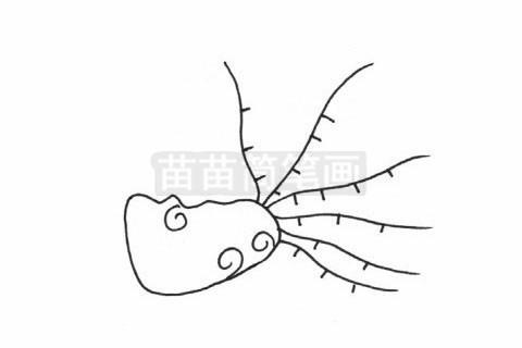 海葵简笔画图片大全 教程