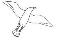 卡通海鸥简笔画图片大全、教程