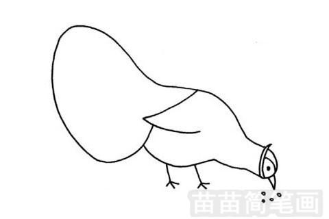 褐马鸡简笔画图片大全 教程