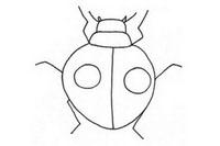 甲虫简笔画图片大全、教程