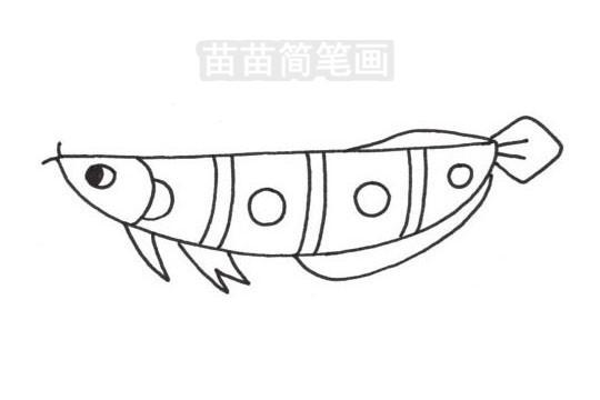 龙鱼简笔画图片大全,教程