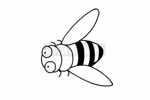 蜜蜂简笔画图片大全作品二
