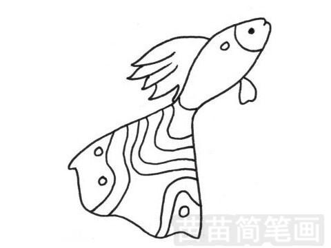 热带观赏鱼简笔画图片大全 画法