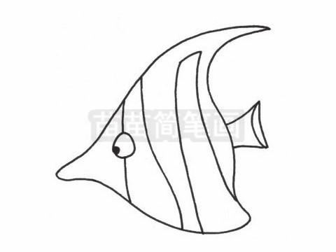 热带观赏鱼小知识:热带鱼的生长繁殖也需要光照,光照可以使热带鱼生长得更快;使鱼体更加绚丽多彩;使鱼的繁殖周期缩短,热带鱼下崽要及时隔离大鱼,防止大鱼吃掉鱼苗.
