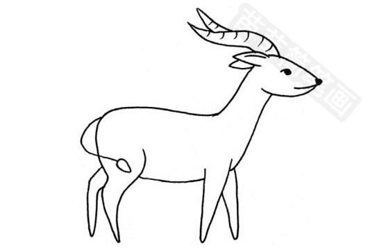 山羊简笔画图片大全作品五 山羊小知识:山羊传染性胸膜肺炎可每年注射一次山羊传染性胸膜肺炎氢氧化铝疫苗,山羊常用的主要有抗生素类、益生素、驱虫药物以及微量元素类和维生素类等。山羊又称夏羊、黑羊或羖羊,和绵羊一样,是最早被人类驯化的家畜之一,山羊一般是按生产性能及用途进行分类的,可分为奶用山羊、绒毛用山羊、毛皮用山羊、肉用山羊和兼用山羊(普通地方山羊)等品种。现在你是不是更加了解山羊了! 苗 苗 简 笔 画提供 的本 文内容为山羊简笔画图片大全、教程