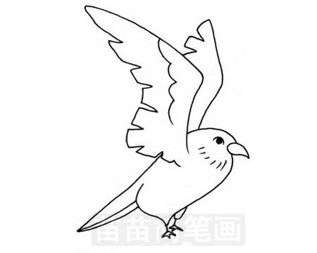 隼简笔画图片大全 教程