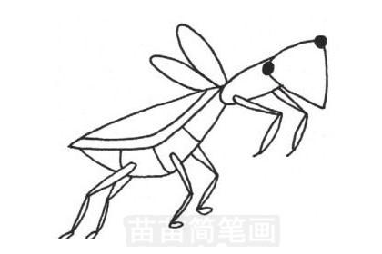 螳螂简笔画怎么画 图片大全