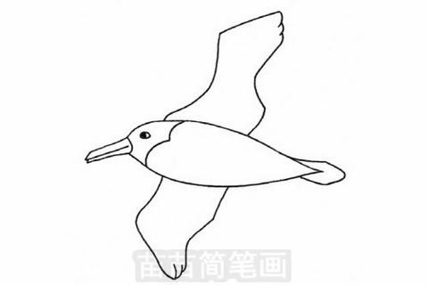 信天翁简笔画大图