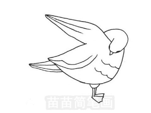 信天翁简笔画图片大全作品五