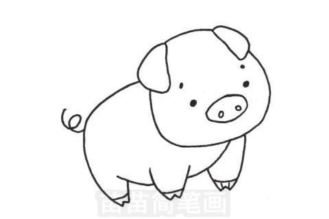 猪简笔画图片大全 教程