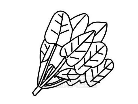菠菜简笔画图片大全 教程