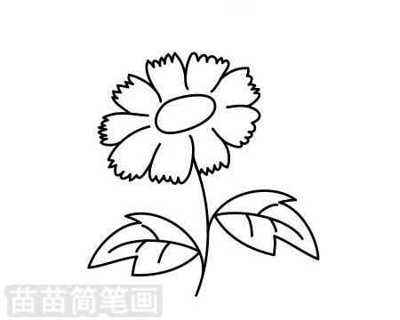 菊花简笔画图片大全作品二