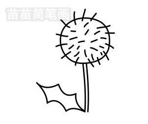 蒲公英简笔画图片步骤五