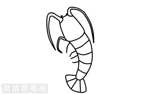 龙虾简笔画图片大全作品二