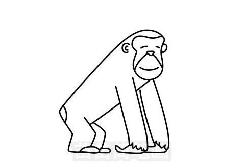 猩猩简笔画图片大全作品一