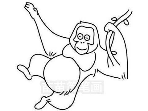 猩猩简笔画图片大全作品三