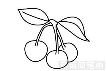 樱桃简笔画图片步骤五