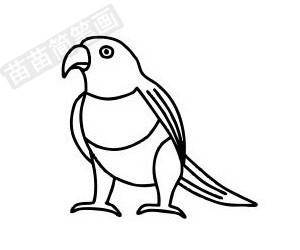 鹦鹉简笔画图片步骤一