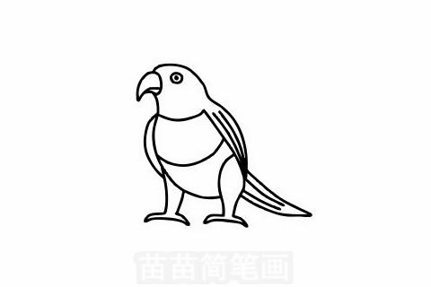 鹦鹉简笔画大图