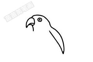 鹦鹉简笔画图片步骤四