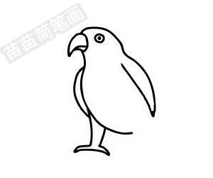 鹦鹉简笔画图片步骤五