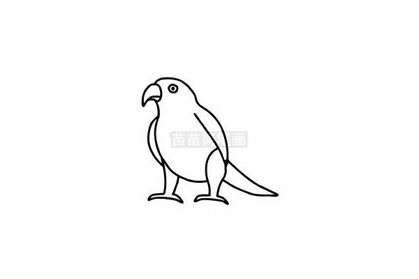 鹦鹉简笔画图片步骤六