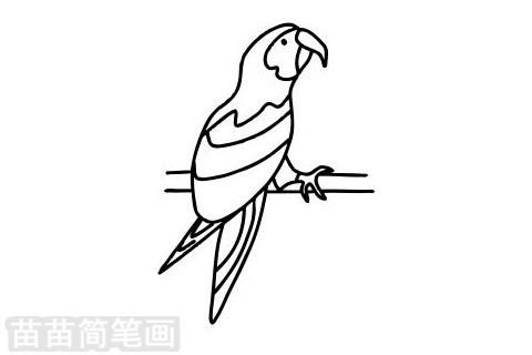 鹦鹉简笔画图片大全作品二
