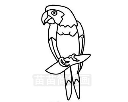 鹦鹉简笔画图片大全作品三