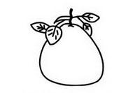 柚子简笔画图片大全、教程