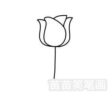 简笔画国花_郁金香简笔画怎么画、图片大全