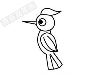 啄木鸟简笔画图片步骤五