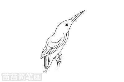 翠鸟简笔画图片大全 教程