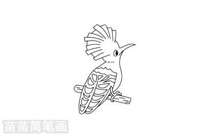 戴胜鸟简笔画图片大全作品二