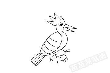戴胜鸟简笔画图片大全 教程